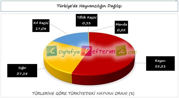 Türkiye'de Hayvancılığın Dağılışı