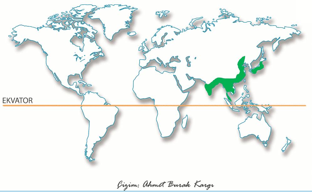 Muson İkliminin Dünya da dağılışını gösteren harita